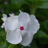 小戸公園の花1
