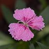ベランダで育てている花1