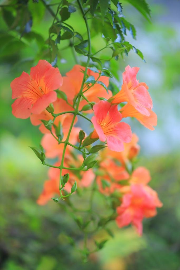 おばあちゃんの花