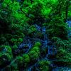 薄明に照らされた新緑の永平寺