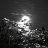 水面に映る月と藻