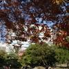 浜離宮恩賜庭園(2)