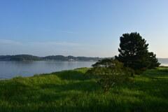 夏の水辺の朝