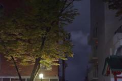 表参道の夜を彷徨う5