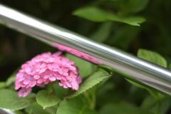 紫陽花4(上野公園)