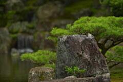醍醐寺(三宝院庭園)2