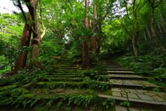 瑞泉寺の階段(鎌倉)