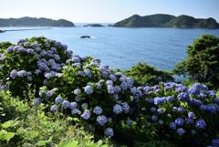 潮騒と紫陽花2