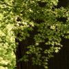新緑の癒し7