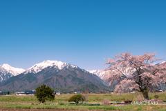 安曇野の春景