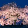 夜桜 見上げる人々