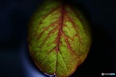 Leafー2