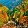 みたらい渓谷の紅葉-2