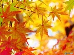 紅葉の彩り-2