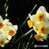 春よ、来い!-2