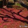 散り花に影