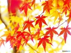 紅葉の彩り-1