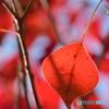 晩秋の風景ー3