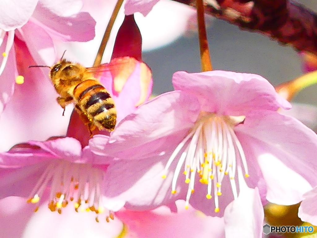 こっちの蜜が甘いかな