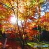 下鴨神社 糺(ただす)の森でー1