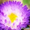 灯る花ーON