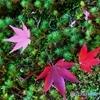 吉城園の落葉