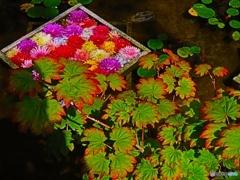 華の池ー3