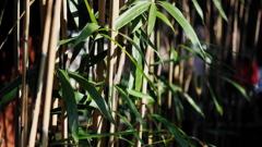 竹三題- 光あびて