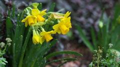 雨の日に咲く 1