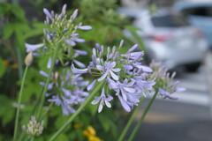 交差点の花