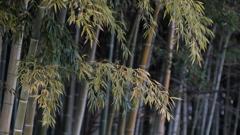 竹三題- 冬に耐え