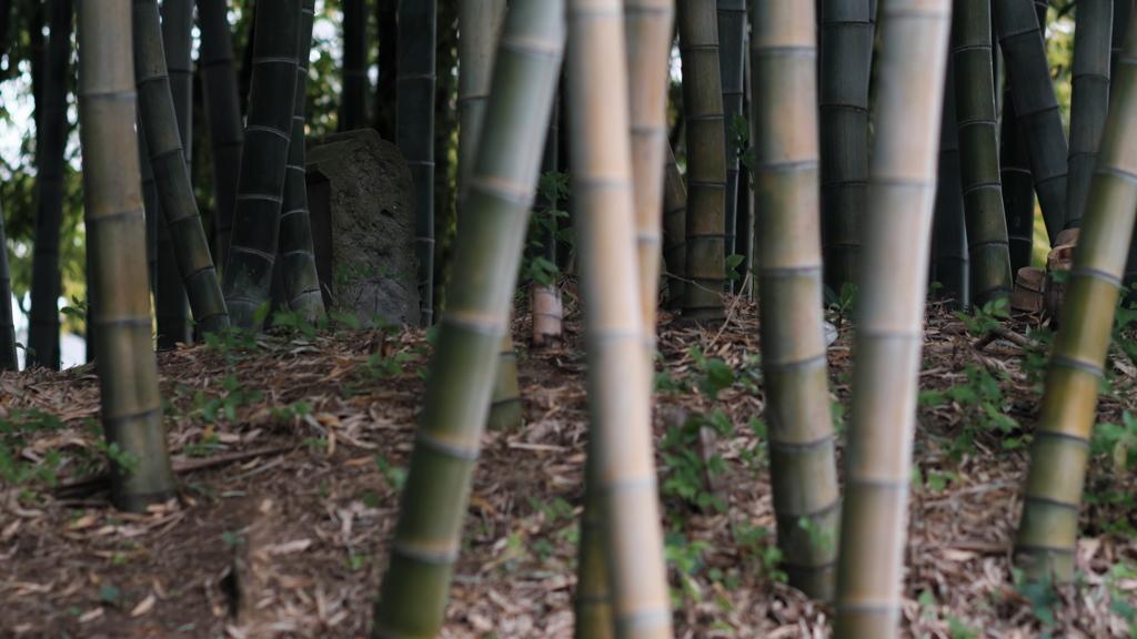 竹林は好きです