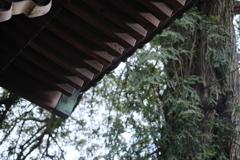 雨宿りの山門
