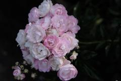 花束をあなたに