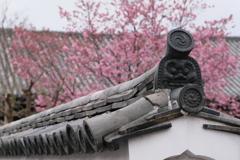 陽光桜と鬼瓦