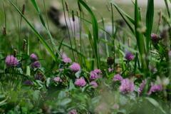 川堤の野草たち