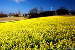 牧場に春が来た