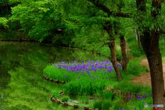 新緑の池畔