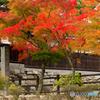 龍護寺の秋