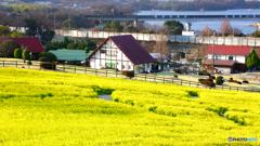 愛知牧場の春