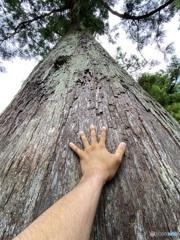 _大木の氣_