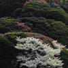 くりはま花の国 向こう側の山ー2