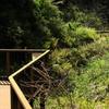 小網代の森へ3