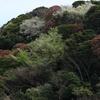 くりはま花の国 向こう側の山ー3