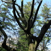 玄海田公園 木