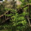 小網代の森12