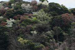 くりはま花の国 向こう側の山−1