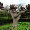 くりはま花の国 なんの木−1