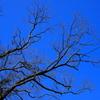 小網代の森11