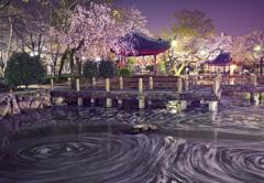 日中友好庭園 桜くるくる